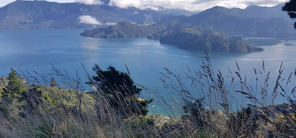 The Queen Charlotte Track and eating my self stupid in New Zealand….